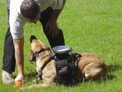 Crean control remoto para perros