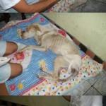 perro-abandonado-2