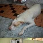 perro-abandonado-6