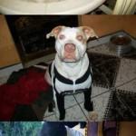 perro-abandonado-8