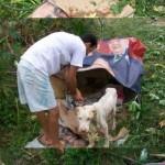 perro-abandonado-9