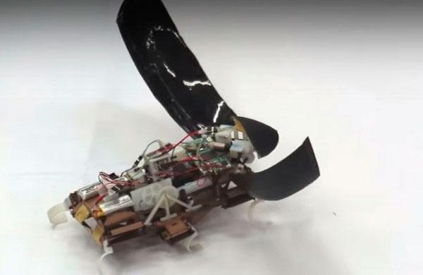 Robots de cucaracha